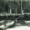 One Log Bridge - Elbe