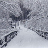 Snow on the Old Elbe Bridge (early 1900s)