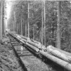 Logs Coming out of the Forest near Mineral in 1949 (Camp #2)