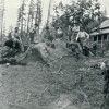 Boettchers Clearing Land in Alder (very early 1900s)