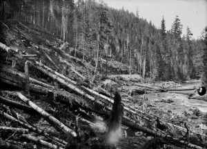 Another shots of Nisqually River - early 1900s