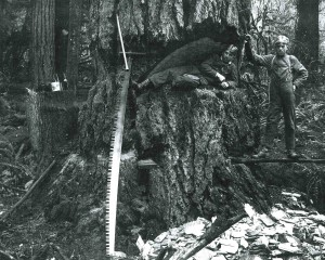 George & Willie Boettcher and a giant tree