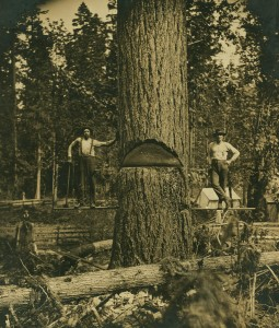 One of the first trees cut in Eatonville