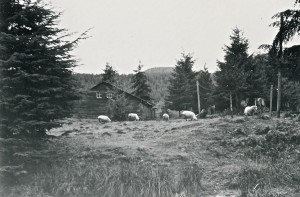 Sheep ranch - Alder