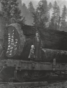 The Large and Small Logs