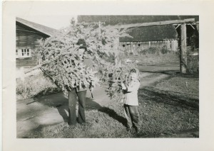 Linda Lewis and Al Lewis bringing in a Christmas tree