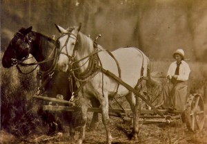 Mary Conrad (Aldred's wife) with horses Bill & Dolly