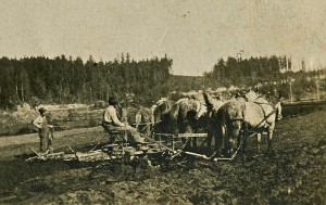 Pete Peterson harrowing with horse team in Ohop Valley