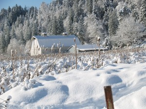 Farm in Ohop Valley