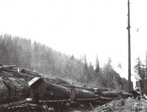 Murray Logging & Timber Co.